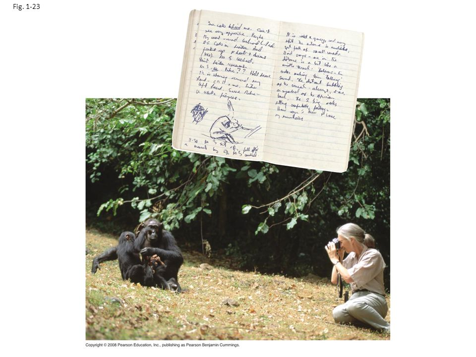 Fig. 1-23 Figure 1.23 Jane Goodall collecting qualitative data on chimpanzee behavior