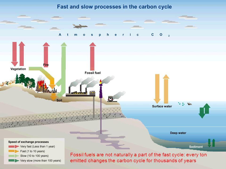 Fossil fuels are not naturally a part of the fast cycle: every ton emitted changes the carbon cycle for thousands of years