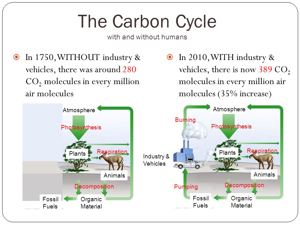 The Carbon Cycle with and without humans