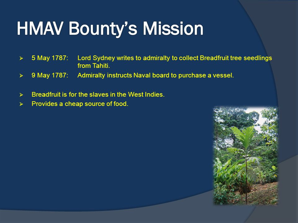 HMAV Bounty's Mission 5 May 1787: Lord Sydney writes to admiralty to collect Breadfruit tree seedlings from Tahiti.