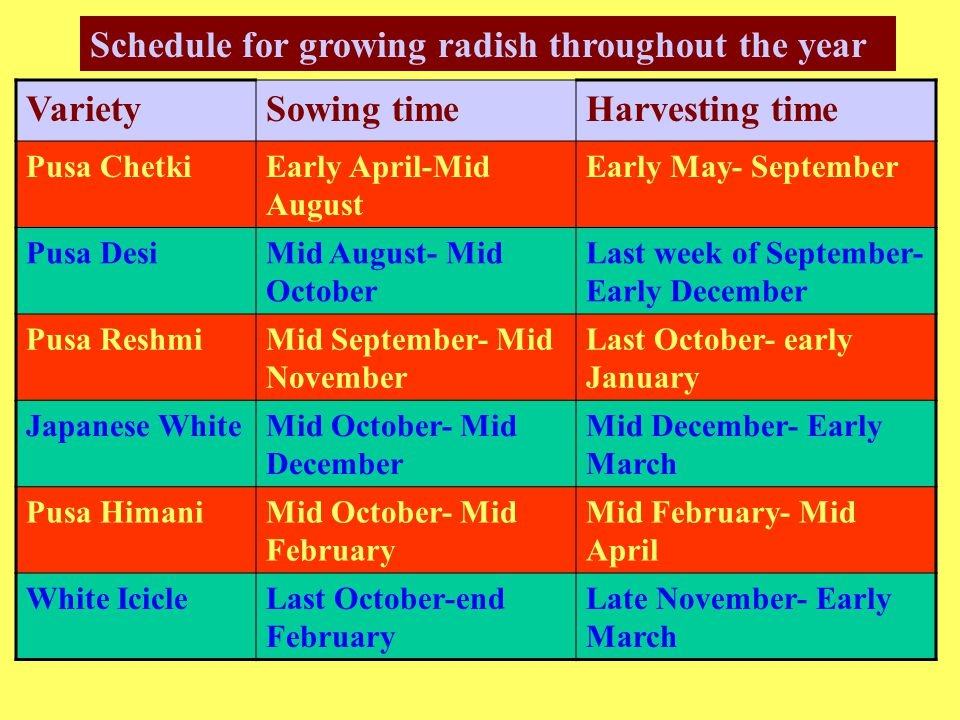 Schedule for growing radish throughout the year Variety Sowing time