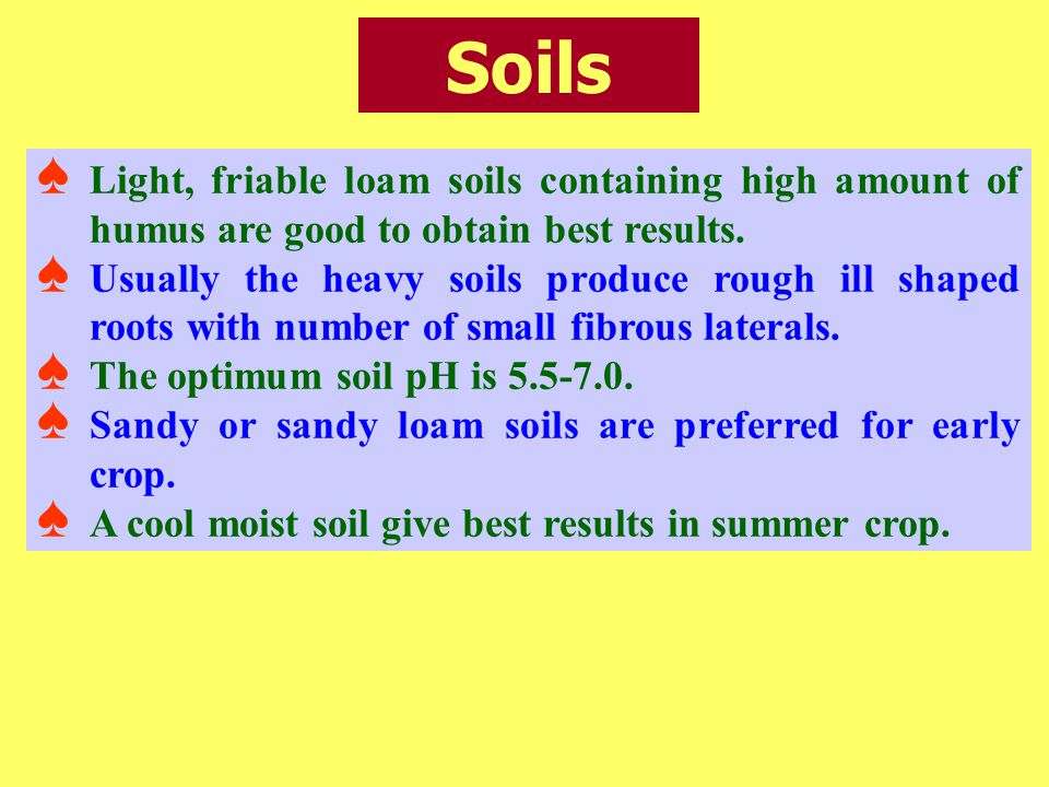 Soils Light, friable loam soils containing high amount of humus are good to obtain best results.