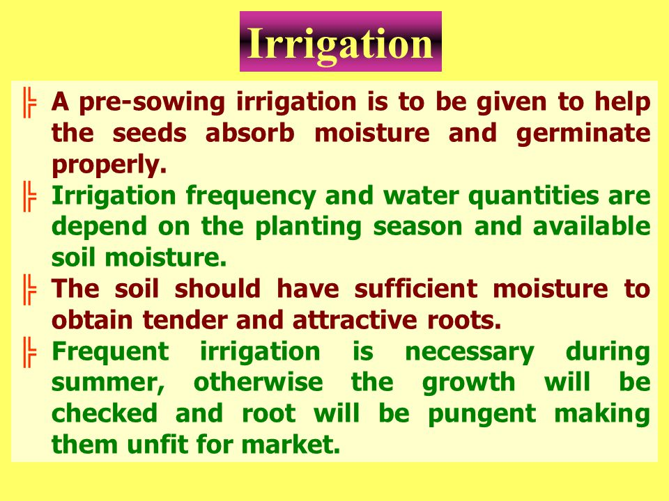 Irrigation A pre-sowing irrigation is to be given to help the seeds absorb moisture and germinate properly.