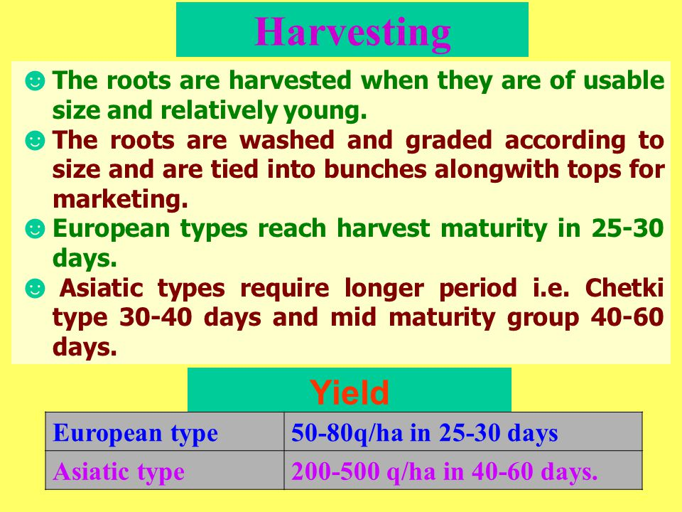 Harvesting Yield European type 50-80q/ha in 25-30 days Asiatic type