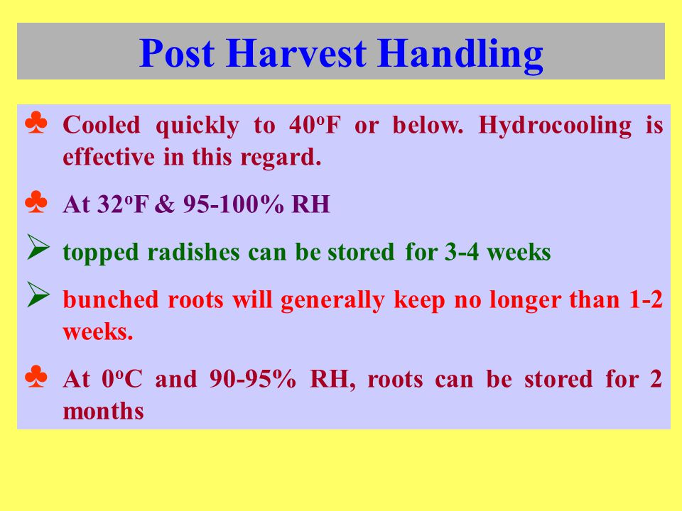 Post Harvest Handling Cooled quickly to 40oF or below. Hydrocooling is effective in this regard. At 32oF & 95-100% RH.