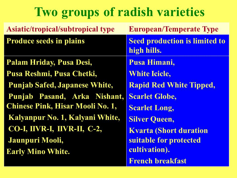 Two groups of radish varieties