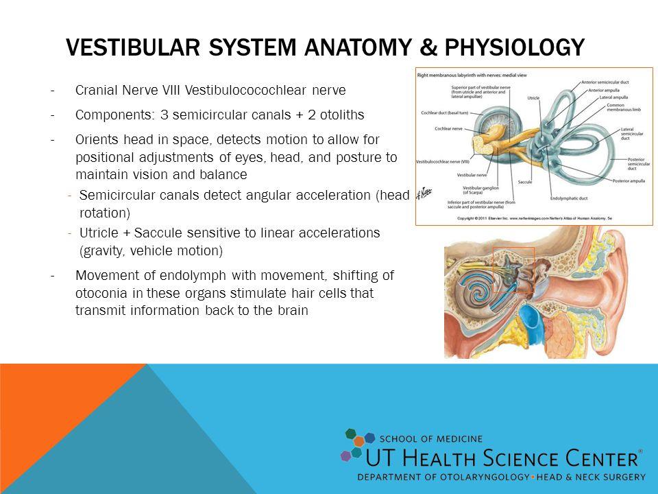Vestibular system Anatomy & Physiology