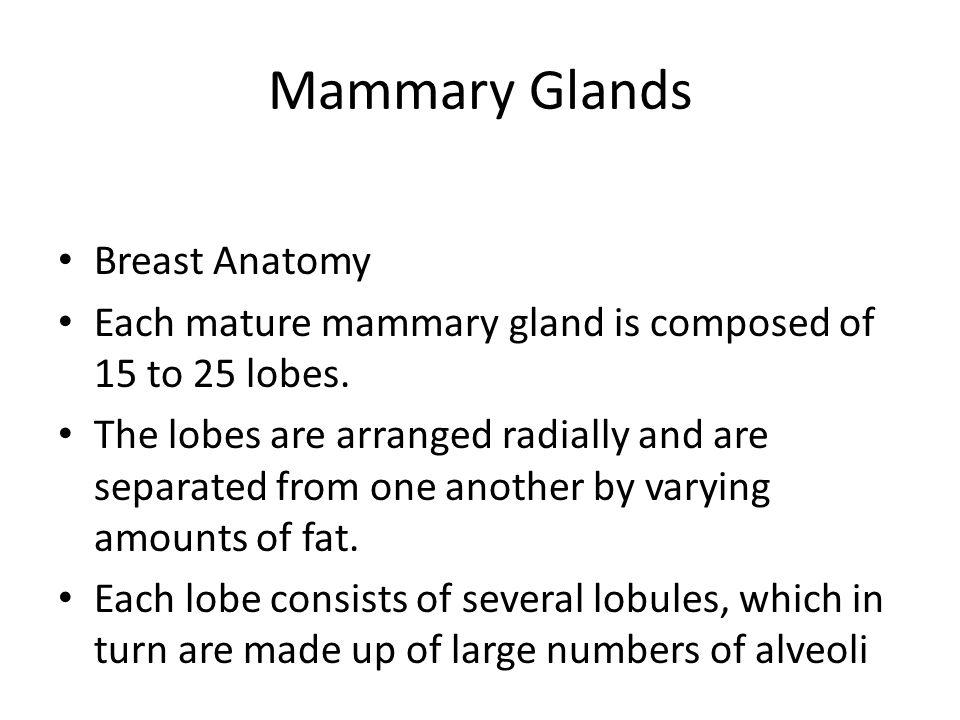 Mammary Glands Breast Anatomy