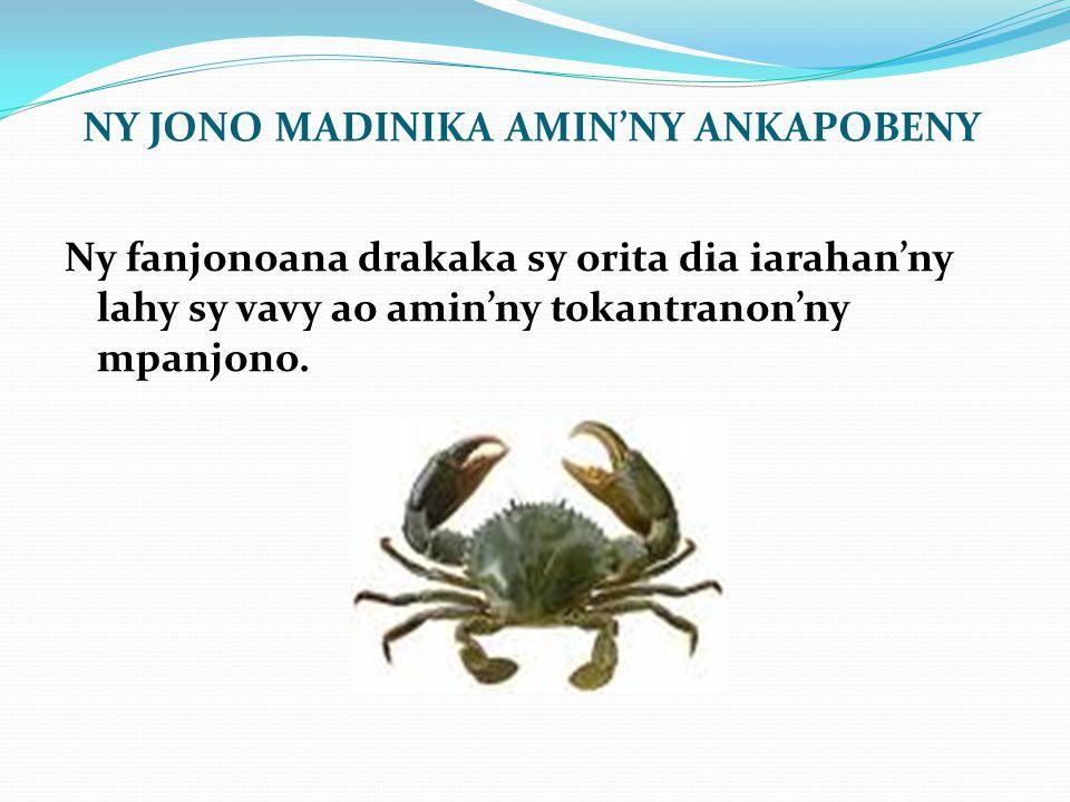 NY JONO MADINIKA AMIN'NY ANKAPOBENY