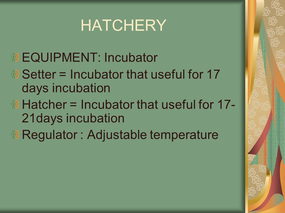 HATCHERY EQUIPMENT: Incubator