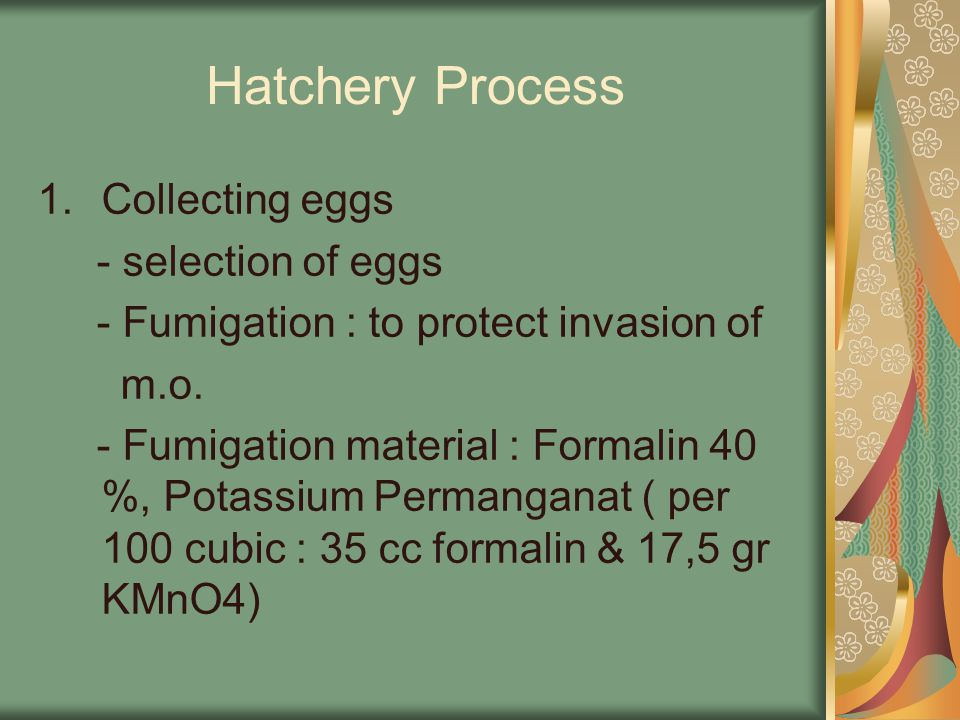 Hatchery Process Collecting eggs - selection of eggs