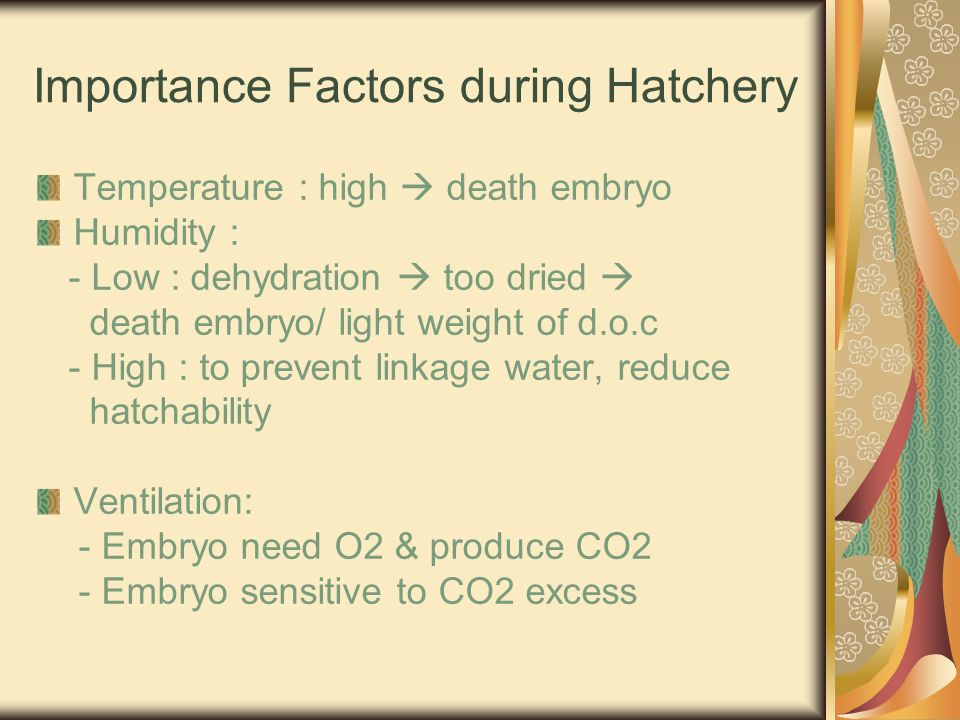 Importance Factors during Hatchery