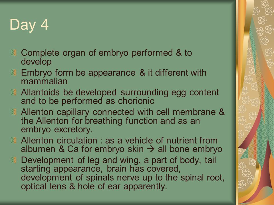 Day 4 Complete organ of embryo performed & to develop