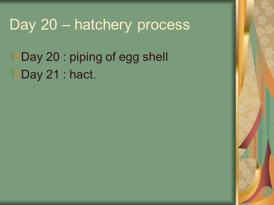 Day 20 – hatchery process Day 20 : piping of egg shell Day 21 : hact.