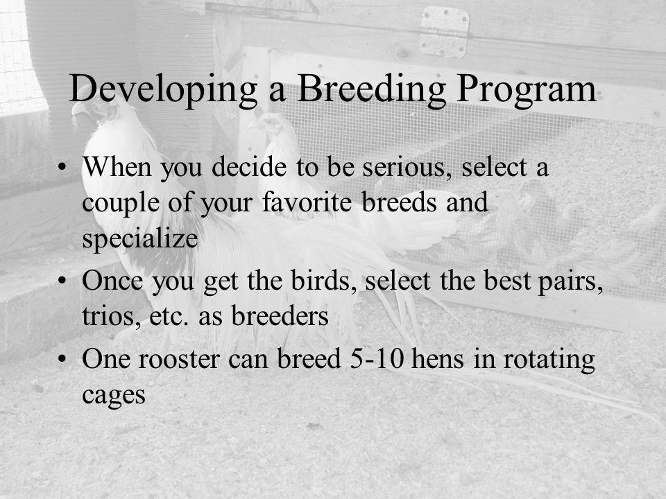 Developing a Breeding Program