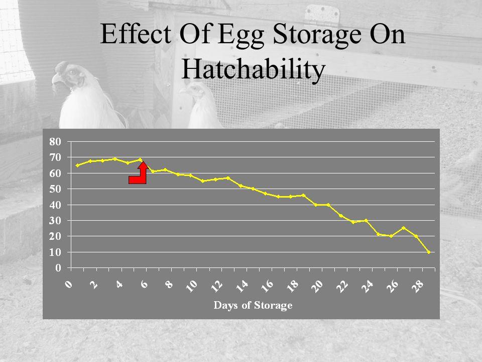 Effect Of Egg Storage On Hatchability