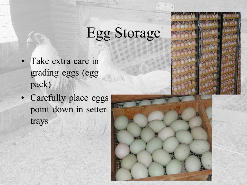 Egg Storage Take extra care in grading eggs (egg pack)