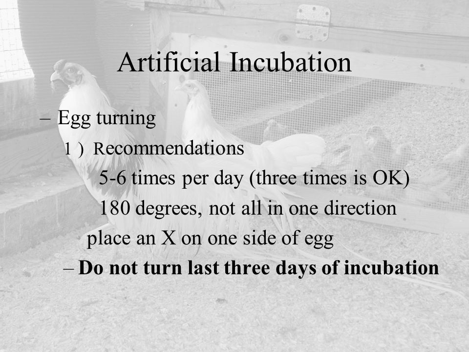 Artificial Incubation