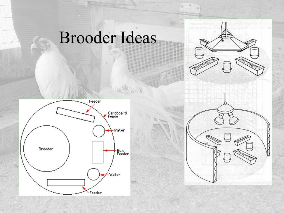 Brooder Ideas