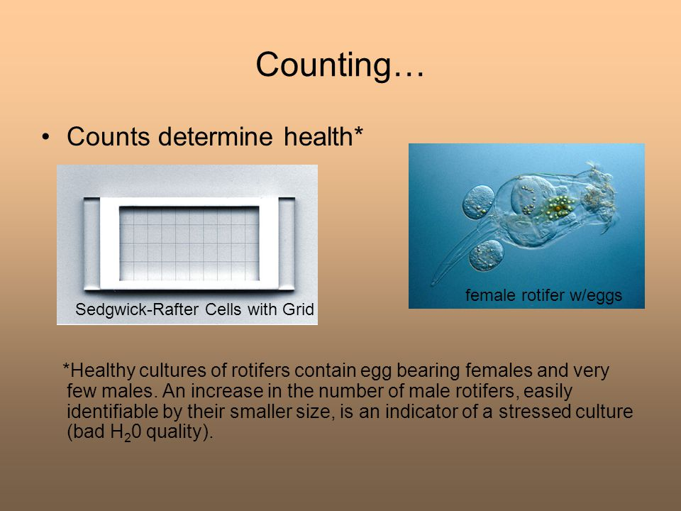Counting… Counts determine health*