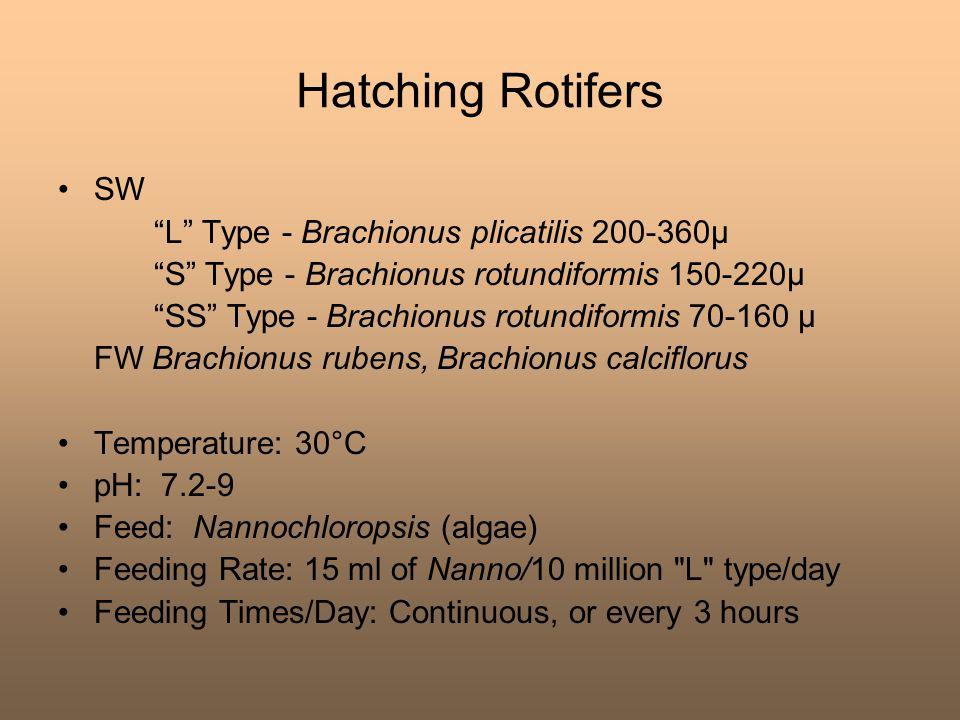 Hatching Rotifers SW L Type - Brachionus plicatilis 200-360μ
