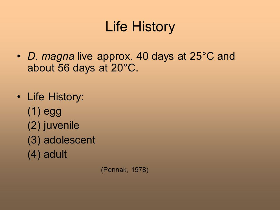 Life History D. magna live approx. 40 days at 25°C and about 56 days at 20°C. Life History: (1) egg.