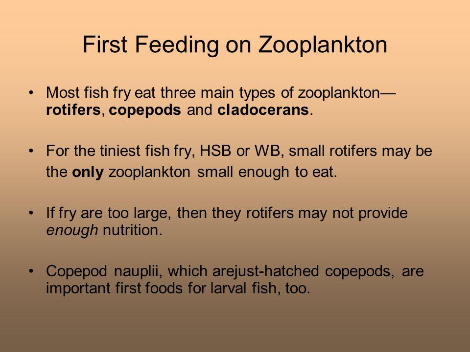 First Feeding on Zooplankton
