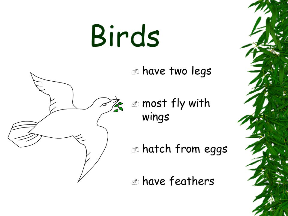 Birds have two legs most fly with wings hatch from eggs have feathers