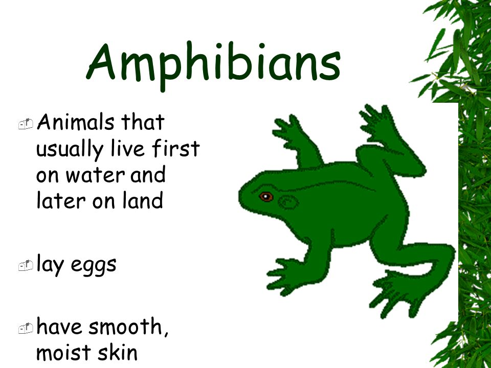 Amphibians Animals that usually live first on water and later on land
