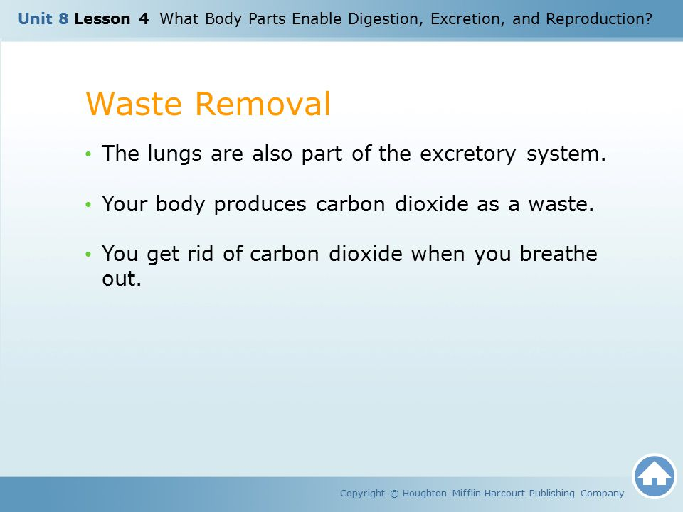 Waste Removal The lungs are also part of the excretory system.