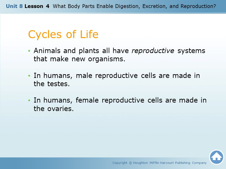 Unit 8 Lesson 4 What Body Parts Enable Digestion, Excretion, and Reproduction