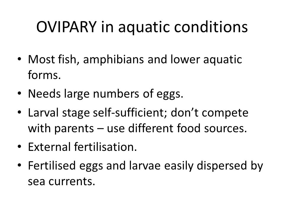 OVIPARY in aquatic conditions