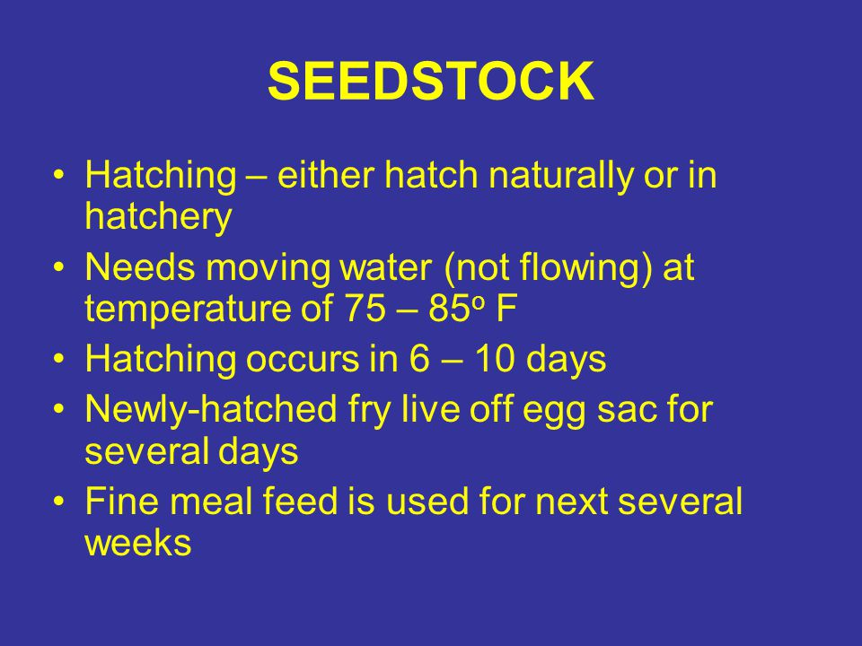 SEEDSTOCK Hatching – either hatch naturally or in hatchery