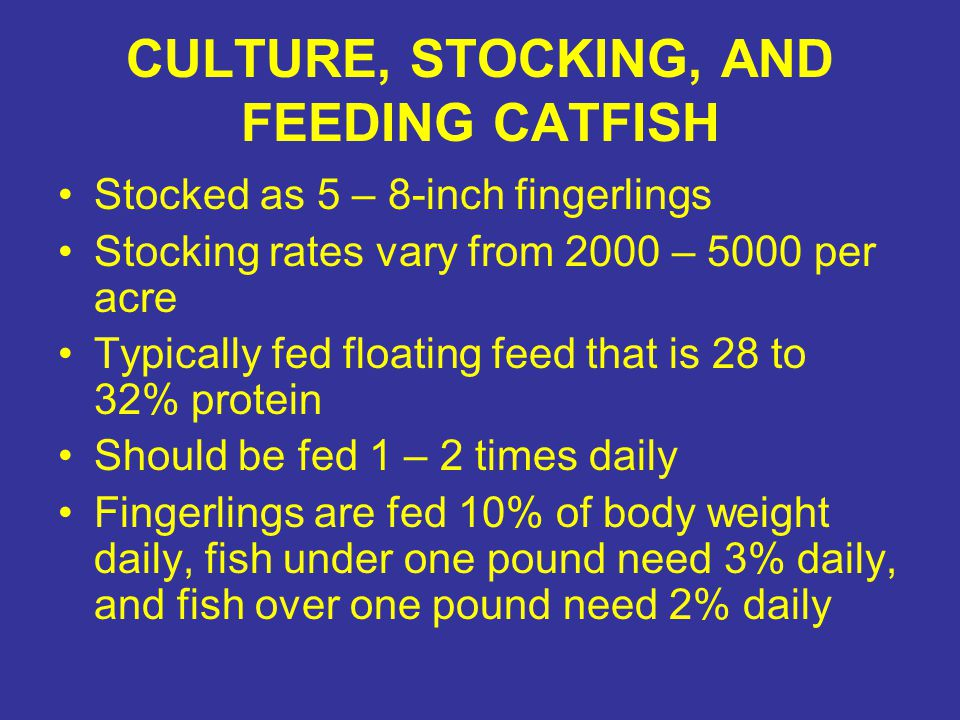 CULTURE, STOCKING, AND FEEDING CATFISH