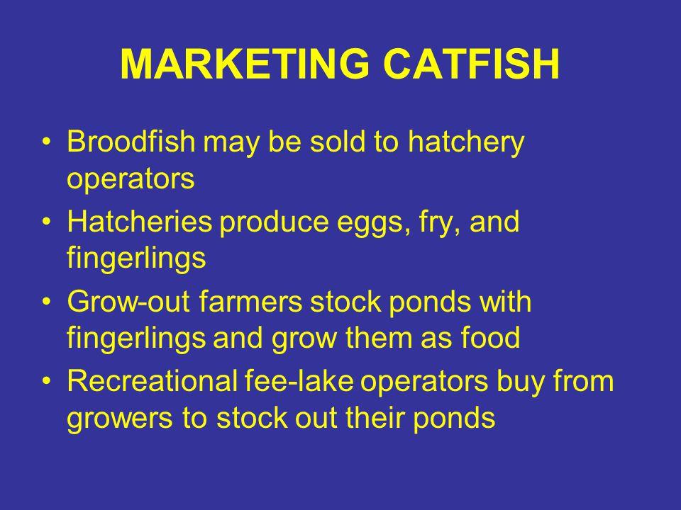 MARKETING CATFISH Broodfish may be sold to hatchery operators