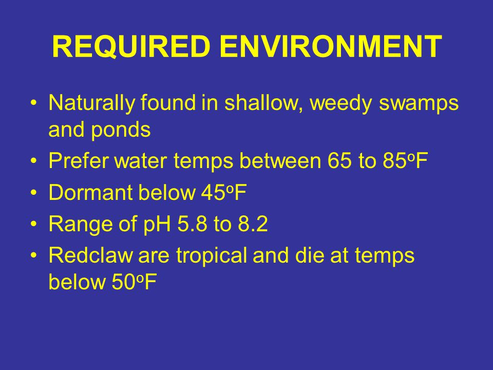 REQUIRED ENVIRONMENT Naturally found in shallow, weedy swamps and ponds. Prefer water temps between 65 to 85oF.