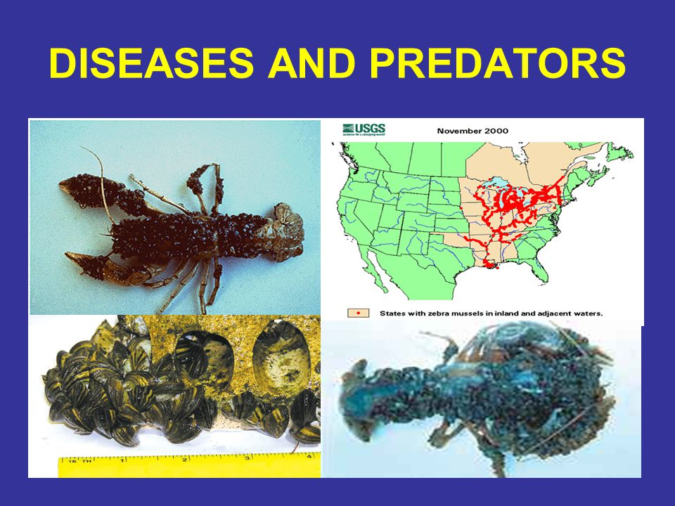 DISEASES AND PREDATORS