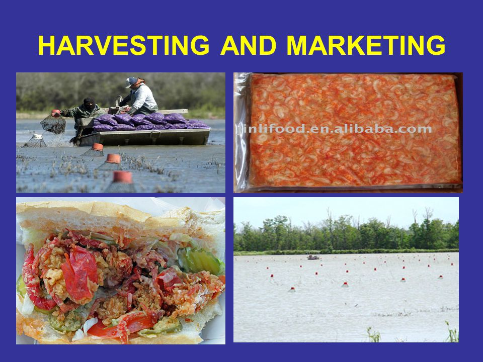 HARVESTING AND MARKETING