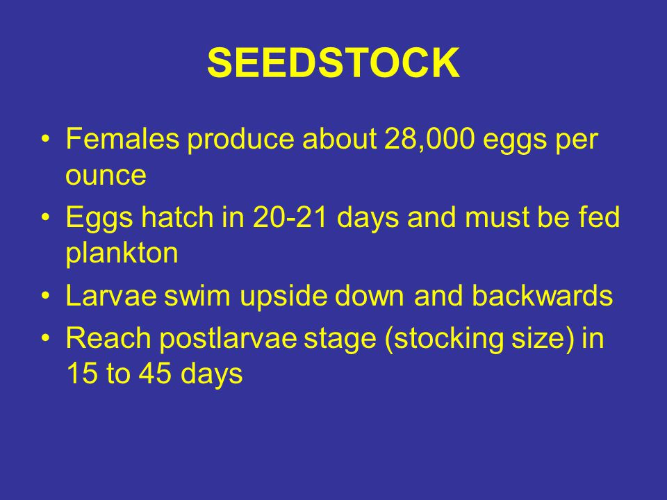 SEEDSTOCK Females produce about 28,000 eggs per ounce