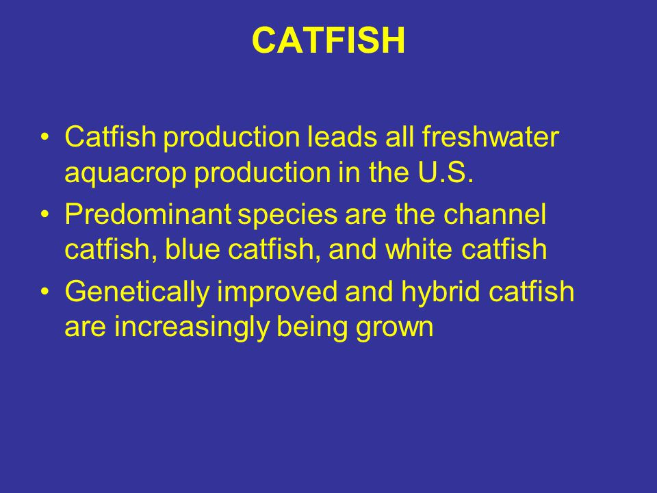 CATFISH Catfish production leads all freshwater aquacrop production in the U.S.