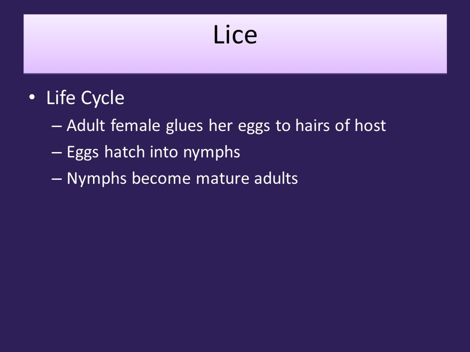 Lice Life Cycle Adult female glues her eggs to hairs of host
