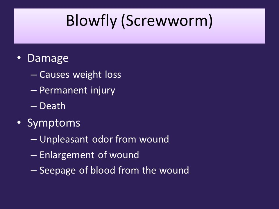 Blowfly (Screwworm) Damage Symptoms Causes weight loss