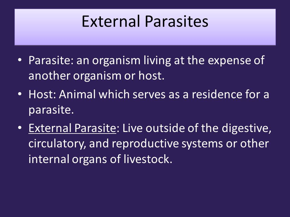 External Parasites Parasite: an organism living at the expense of another organism or host. Host: Animal which serves as a residence for a parasite.