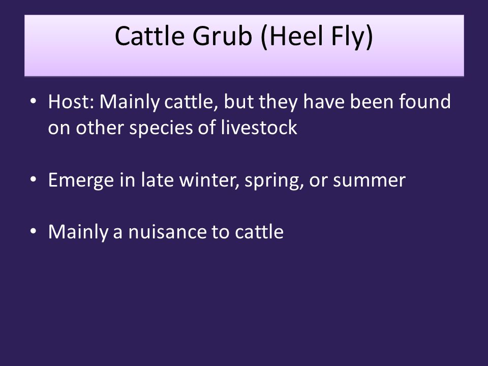 Cattle Grub (Heel Fly) Host: Mainly cattle, but they have been found on other species of livestock.