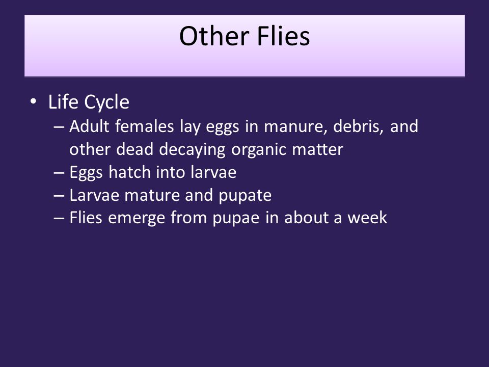 Other Flies Life Cycle. Adult females lay eggs in manure, debris, and other dead decaying organic matter.