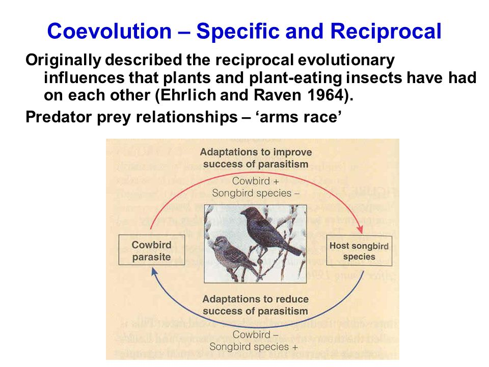 Coevolution – Specific and Reciprocal