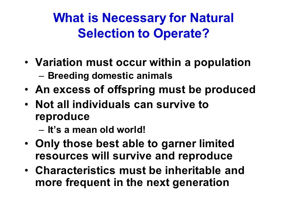 What is Necessary for Natural Selection to Operate