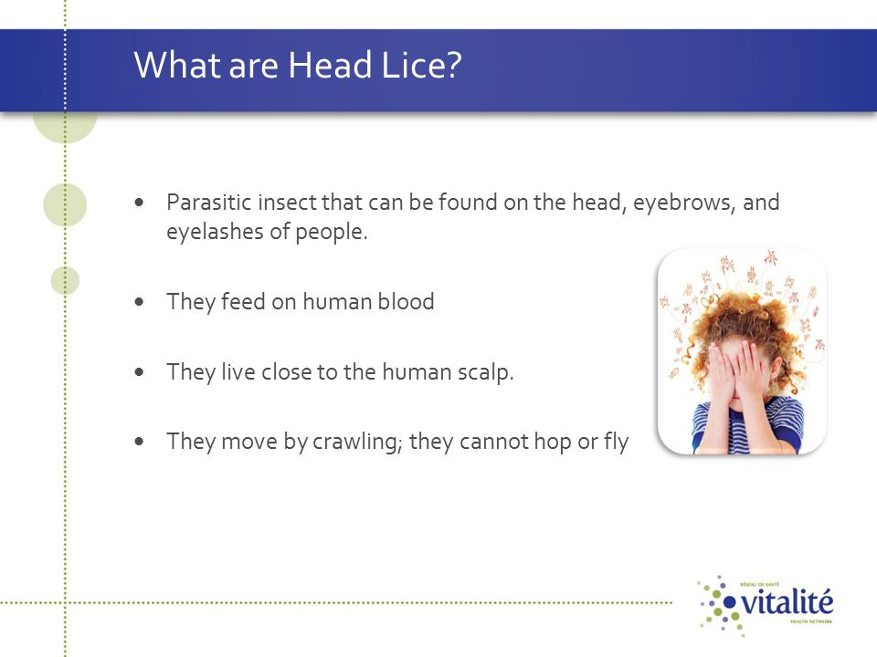 What are Head Lice Parasitic insect that can be found on the head, eyebrows, and eyelashes of people.
