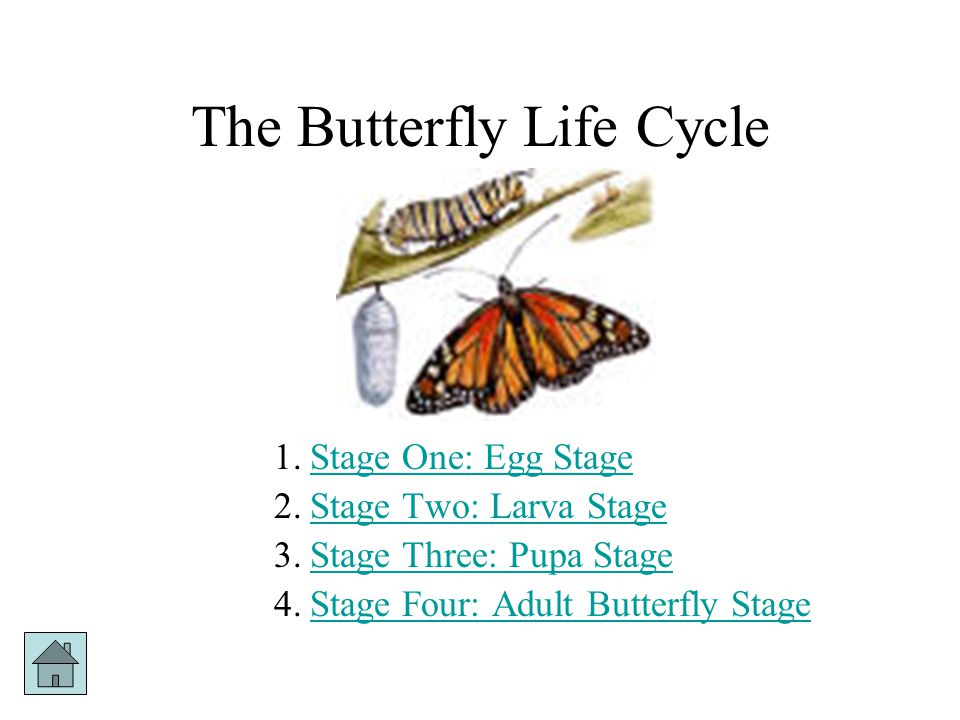 The Butterfly Life Cycle
