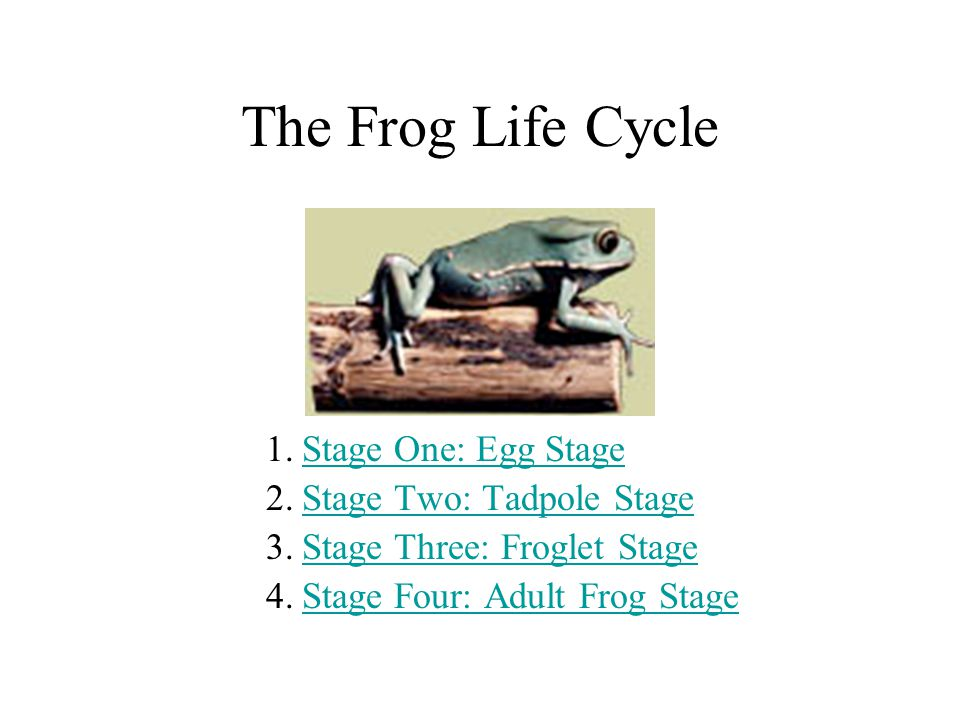 The Frog Life Cycle Stage One: Egg Stage Stage Two: Tadpole Stage